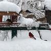 snow07 2-26-10