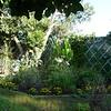 Gely's garden in August 2012.