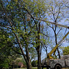 clearing some o fthe smaller branches