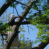 gettin into the big branches now.......