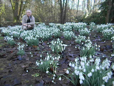 Listen to Tim Whiteley talk about Galanthus Sam Arnott, which is, in his and many other people's opinion, including myself, definitely the best snowdrop, deserving its spot amonghst the top 3 in any snowdrop collection