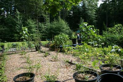 Yard/Garden 2013