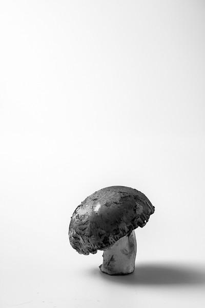 Photography Portfolio - Joel Smith