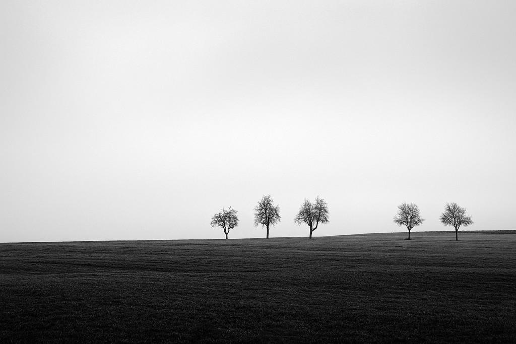 Fünf Bäume