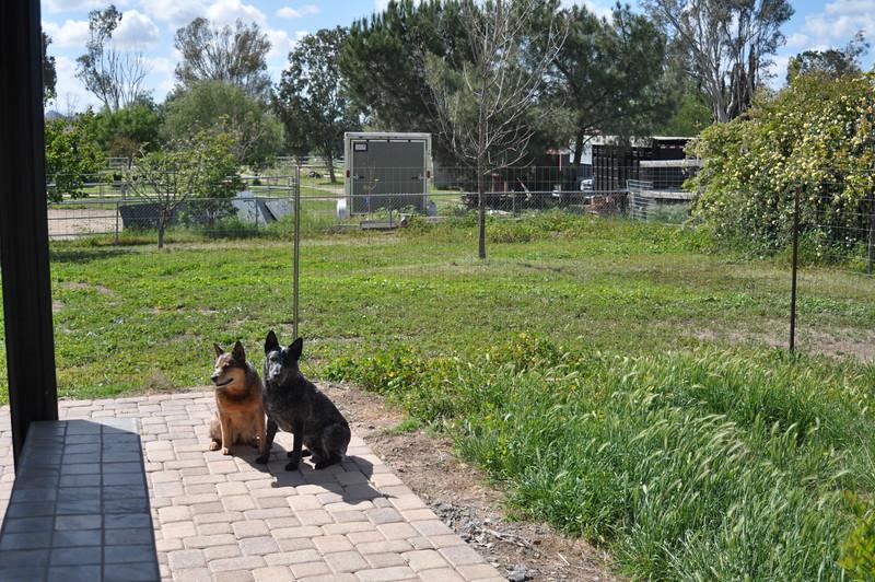 Patio & Grassy Area