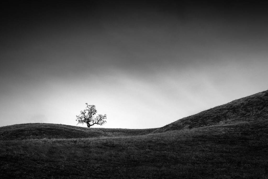 Tree among Sweeping Hills