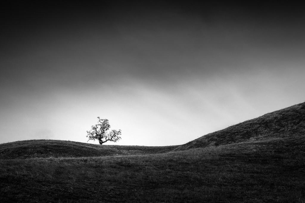 Tree among Sweeping Hills