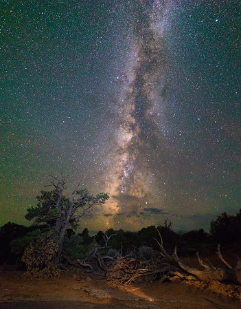 Milky Way Over Old Trees