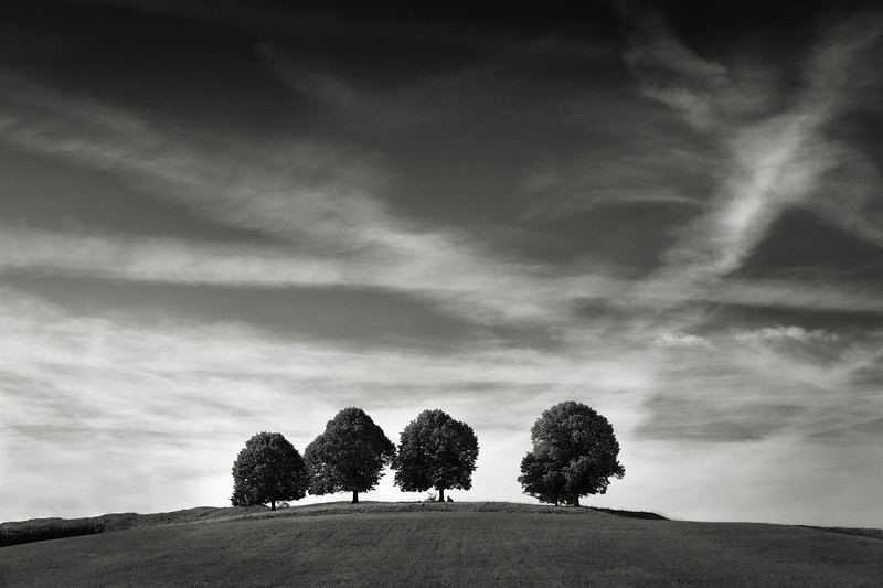 Vier Linden