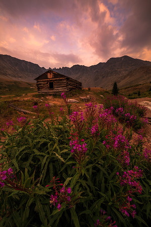 Wildfire Smoke and Fireweed