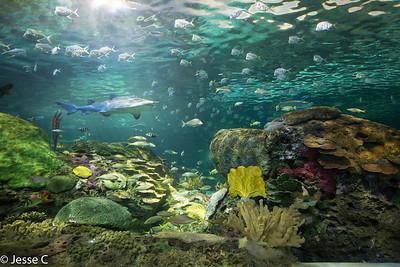 Ripley's Aquarium, Toronto, Ontario
