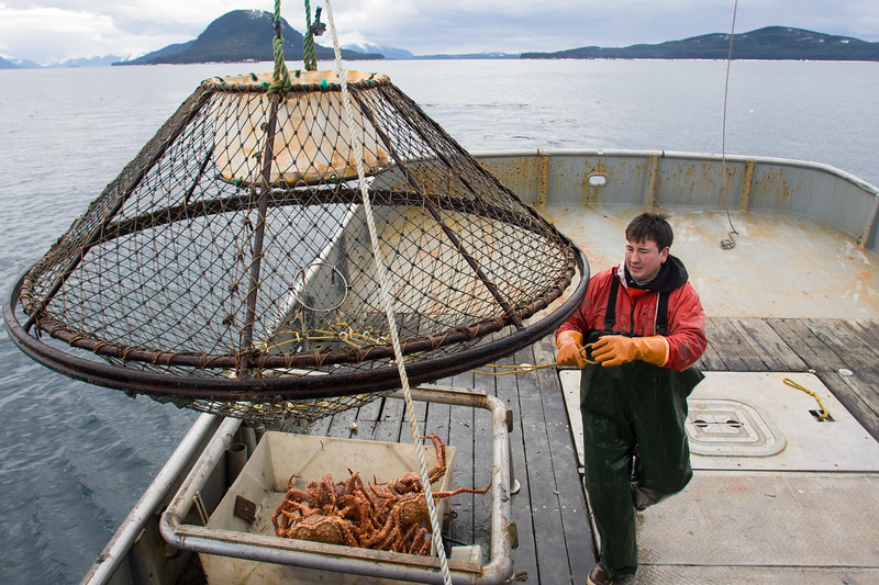 Commercial golden king crab fisherman in Southeast Alaska