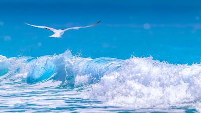 Seagull in flight