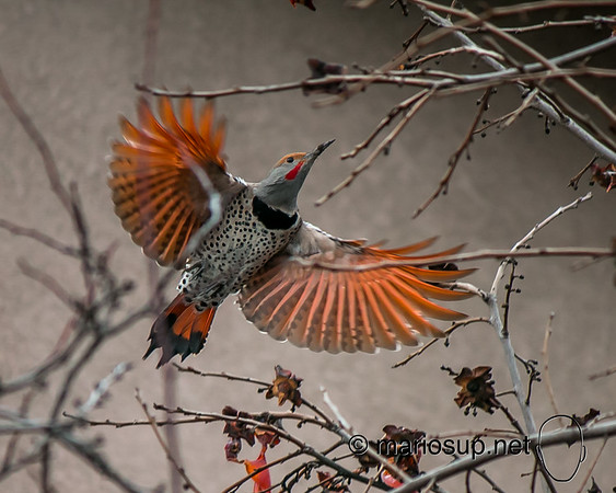 Flicker in flight