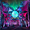 Sherwood Forest | Electric Forest