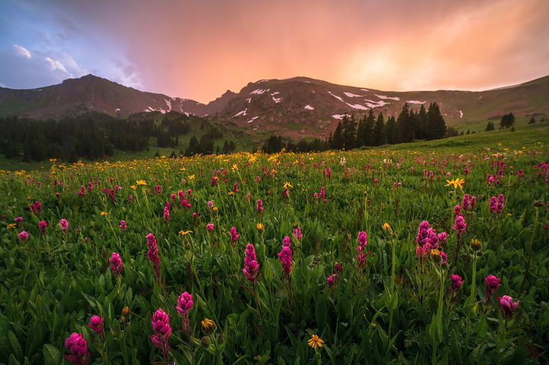 Post Rain Wildflowers