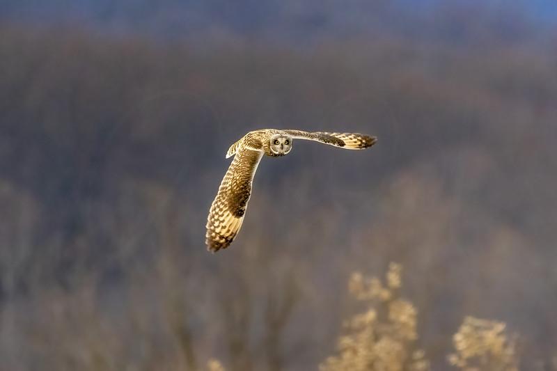 Gliding Stare