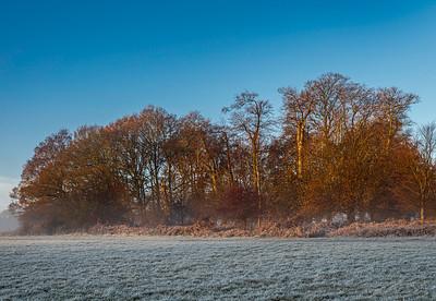 UK - Hertfordshire - Frithsden Copse