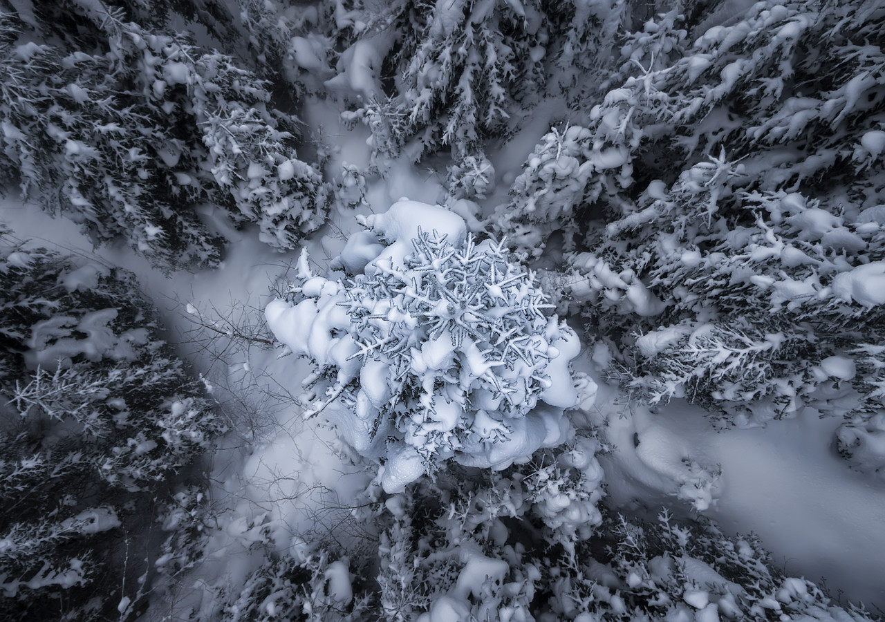 A Pine from above