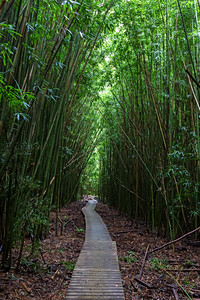 """Boardwalk"" (Bamboo Forest, Haleakala National Park)"
