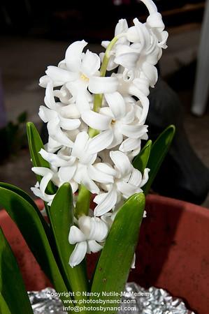 FlowersPBN_9892