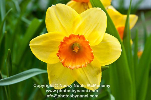 FlowersPBN_9901