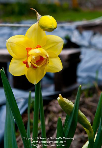 FlowersPBN_9907