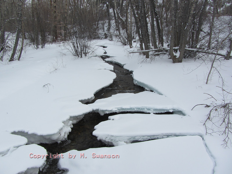 2/8:  Upstream from the culvert ice bridges and plateaus still hang tight.