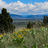 5/25:  View to the north, Rock Canyon and the Crazies beyond, from the trail.  Arrow-leaved Balsamroot in bloom in the foreground and carpeting the hillsides up here.
