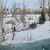 12/18:  And one from my spectacular pano mode on the Samsung.  The creek has a bit of a curve at this point (dramatized by the camera pano of course) - and behind the cottonwood you can see the point where that side channel re-enters for reference.