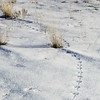 12/12:  Tracks of the small scale hoards are everywhere too.  Here - an elephant shrew hopped from one grass clump to another.