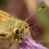 Skipper with coil