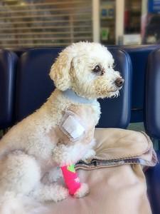 Poppie in hospital