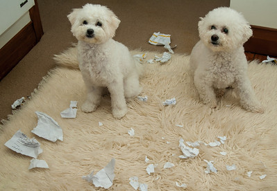 The dog ate my homework - but which one?