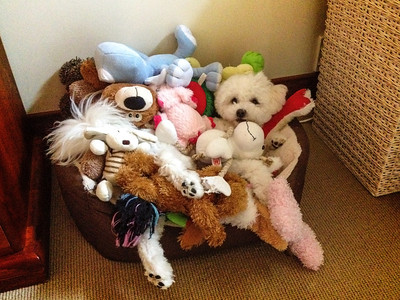 Spot Bella in her toy box