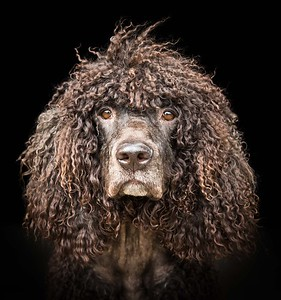 Dog Photography by Andy Biggar Photography