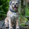 Dog Photographer Andy Biggar