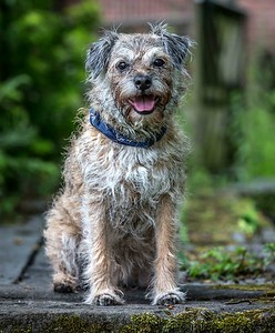 Dog Photographer Andy Biggar
