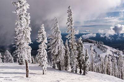 Frozen Trees, Mt. Shasta