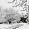 Feb 12 - Record Snowfall.