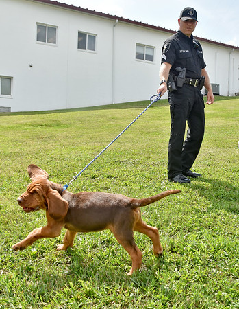 """(Brad Davis/The Register-Herald) Sgt. Randy White handles 9-week-old bloodhound Trigger, one of three new K-9 members to join the force at the Raleigh County Sheriff's Office, during a """"meet and greet"""" with local media Thursday afternoon. Young Trigger is still in training and will be ready for active service at about 5 or 6 months old."""