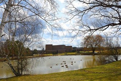 Ducks and geese in a pond at Woodrow Wilson High School. (Rick Barbero/The Register-Herald)