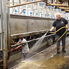 Lauren Perkins cleans the milking area after the morning milking at Perk Organic Dairy Farm in Frankford. Jenny Harnish/The Register-Herald