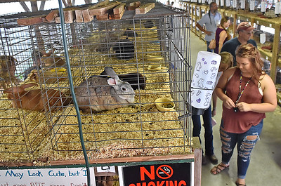(Brad Davis/The Register-Herald) Patrons tour the rabbit hutches during opening day at the State Fair Thursday afternoon.