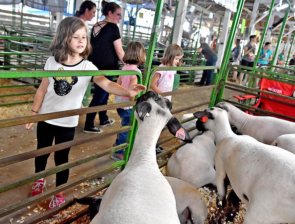 (Brad Davis/The Register-Herald) Seven-year-old Oak Hill resident Sadie Criss, left, says hello to a market lamb as she, 6-year-old twin sisters Maiya (far right) and Jaeda (middle), mother Jennifer Alderman (background in black) and her friend Blanche Anderson take in the scenes during opening day at the State Fair Thursday afternoon.