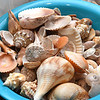Seashells collected by Joyce Yeargan, of Beckley.<br /> (Rick Barbero/The Register-Herald)