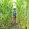 Berkley Miller trims a path in the 4000 sq ft  kids corn maze at the State Fair of West Virginia Tuesday. Miller's family owns and operates Miller's Nightmare Haunted Farm in Lewisburg and this is their second year running a maze at the fair. Jenny Harnish/The Register-Herald