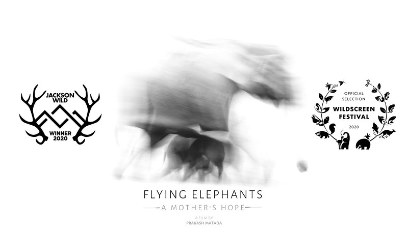 Flying Elephants Landscape
