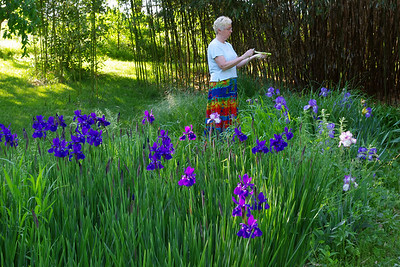 Rita in her iris garden, evaluating the culinary potential of a bamboo shoot. May 2010.