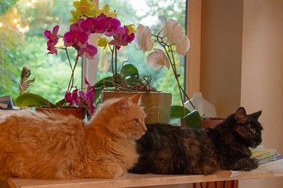 Leo and Crumpet hanging out with Rita's orchids.